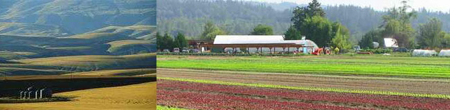 サプリメント原料農場