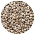 ヘンプ種子