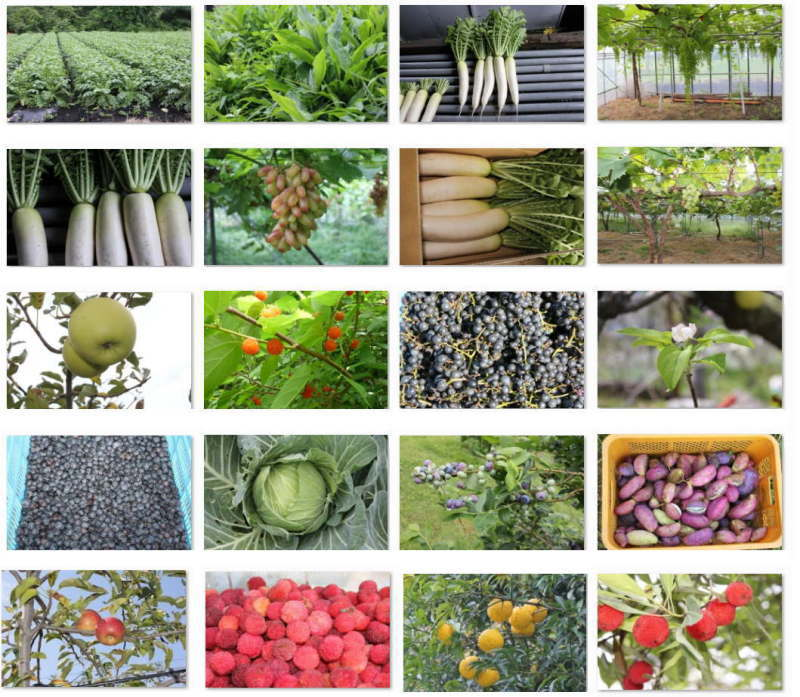 ファスティングプレミアム 野菜と果物