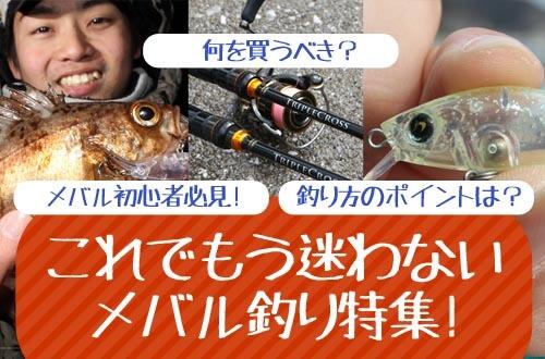 これでもう迷わないメバル釣り特集!メバル初心者必見!何を買うべき?釣り方のポイントは?
