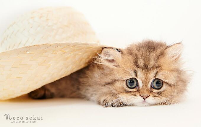 ハンモック・ベッド・爪とぎ・消臭剤など、こだわりの猫用品を販売しているネコ専門店