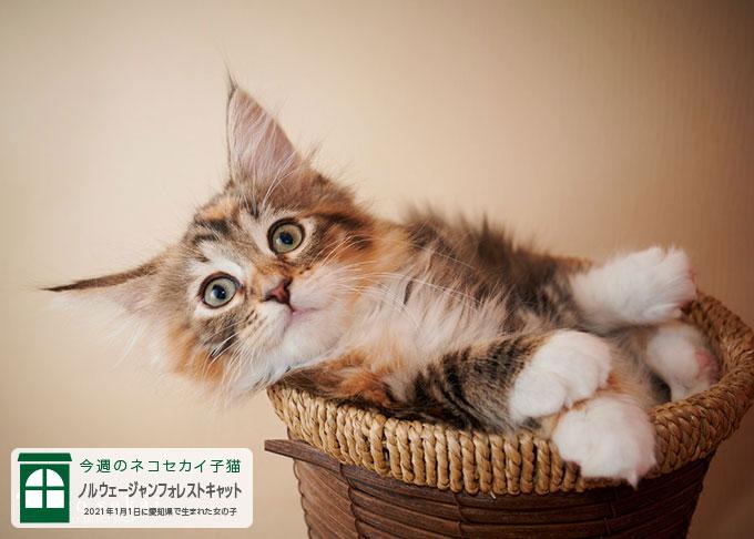ハンモック・ベッド・爪とぎ・消臭剤など、こだわりの猫用品を販売しているネコもよろこぶ専門店