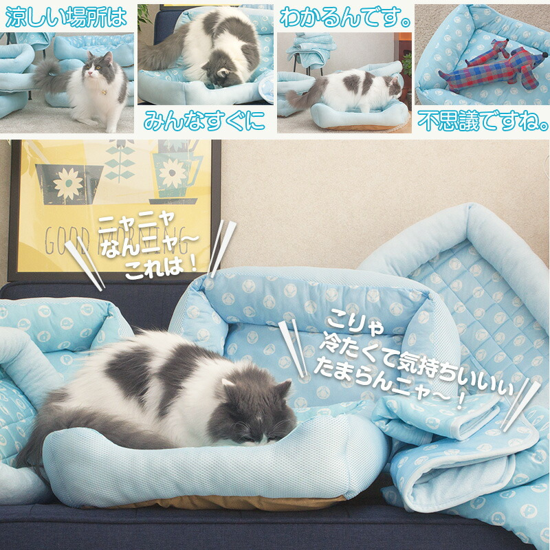 Cool-Pet_涼しい場所は