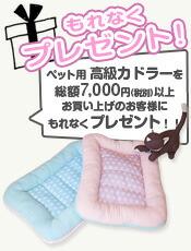 7000円present