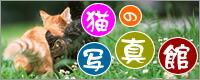 猫の写真館