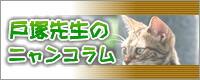 戸塚先生のニャンコラム