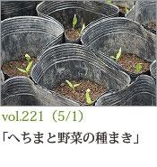 へちまと野菜の種まき