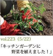 キッチンガーデンに野菜を植えました!