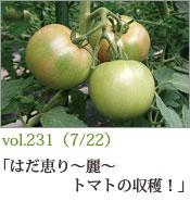 はだ恵り〜麗〜トマトの収穫!