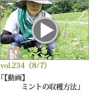 【動画】ミントの収穫方法