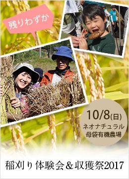 稲刈り体験会