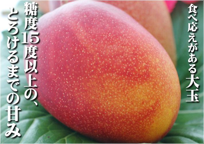 糖度15%以上の甘さのアップルマンゴー