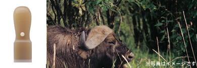 オランダ水牛イメージ