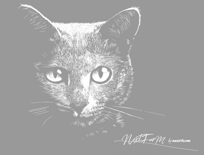 ロシアンブルー ボルサリーノ かわいい猫 黒猫