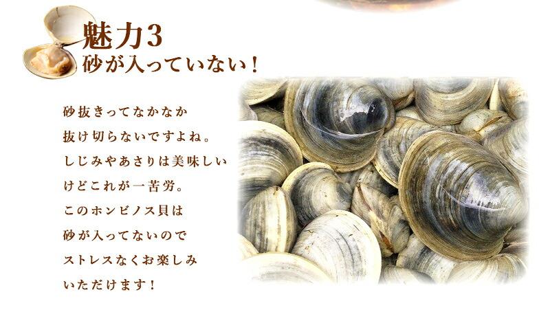 千葉県産ホンビノス貝