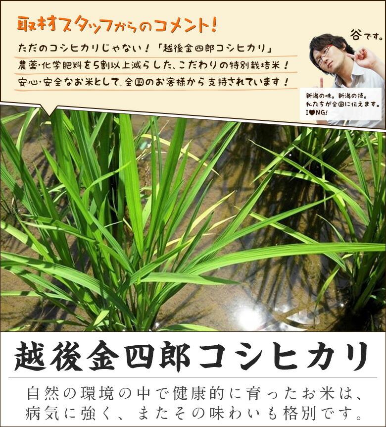 ただのコシヒカリじゃない!「越後金四郎コシヒカリ」 農薬・化学肥料を5割以上減らした、こだわりの特別栽培米! 安心・安全なお米として、全国のお客様から支持されています!