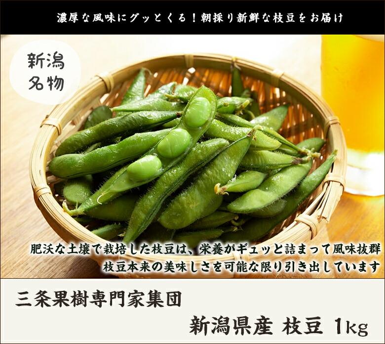 三条果樹専門家集団 新潟県産枝豆 1kg