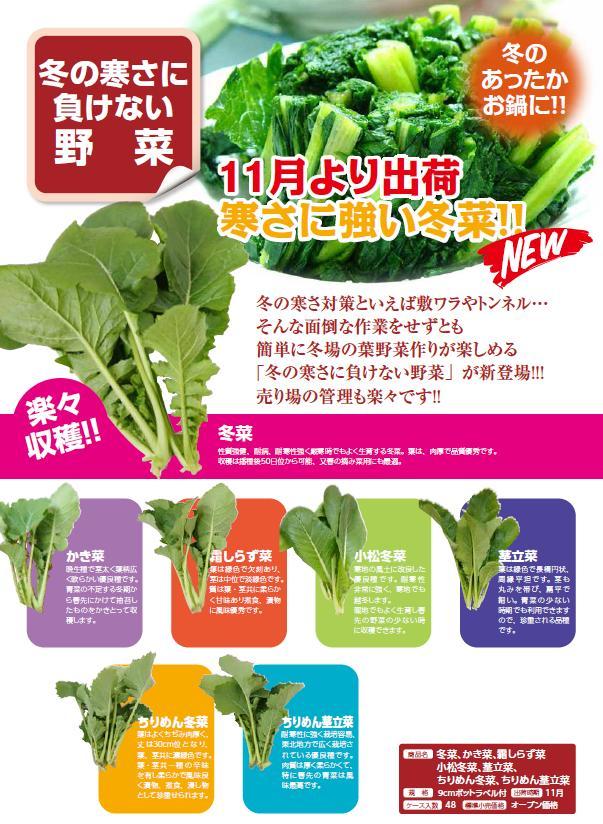 【寒さに強い冬菜シリーズ】