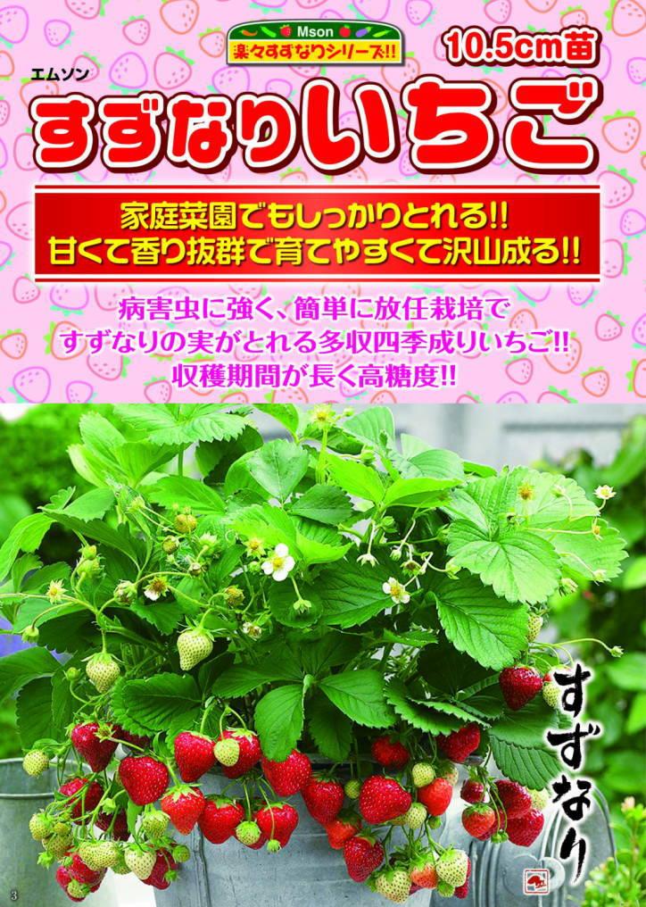 の 苗 イチゴ