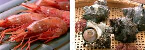 ぴっちぴちの鮮魚セット