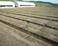 玉ねぎ農場