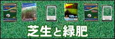 芝生と緑肥