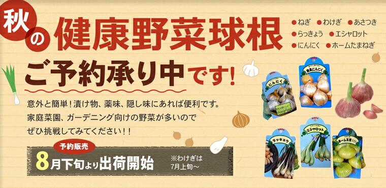 秋の健康野菜球根ご予約承り中!