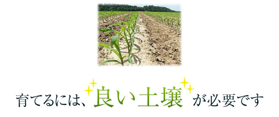 育てるには良い土壌が重要です。