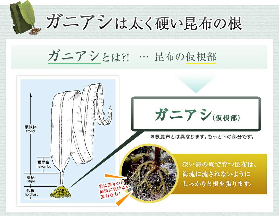 ガニアシは太く硬い昆布の根。深い海の底で育つ昆布は、海流に流されないようにしっかりと根を張ります。※根昆布とは異なります。もっと下の部分です。