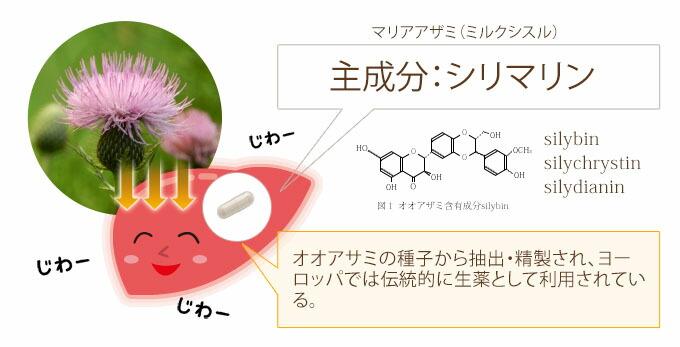 主成分シリマリン オオアザミの種子から抽出・精製され、ヨーロッパでは伝統的に生薬として利用されている。