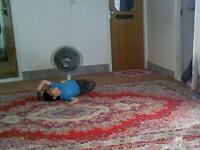 イスファハン・ペルシャ絨毯を織っているお宅