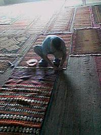 まっすぐ張った糸を目印にキリムに釘を打つ3 キリム&ペルシャ絨毯専門店オリエンタルムーン