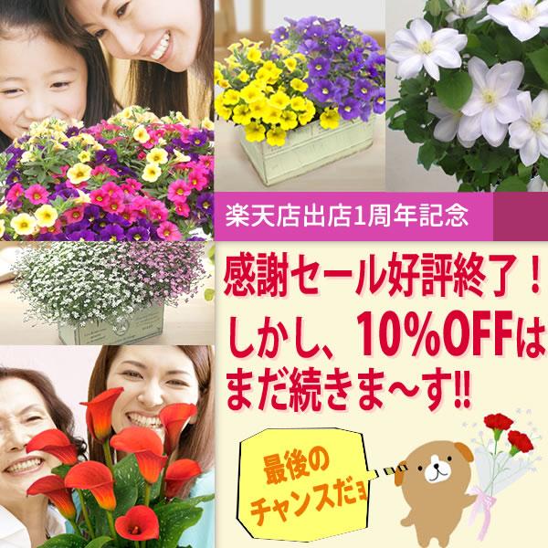 鉢植え/母の日/プレゼント/ギフト/ディスプレー/通販
