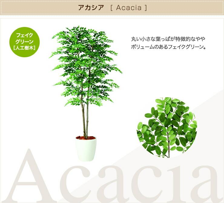 アカシア フェイクグリーン 人工観葉植物 オフィス