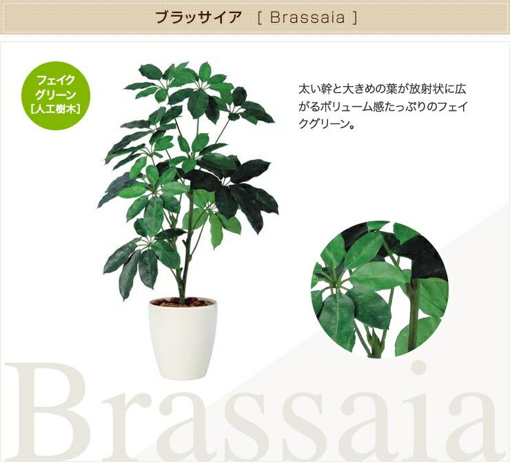 ブラッサイア フェイクグリーン 人工観葉植物 オフィス
