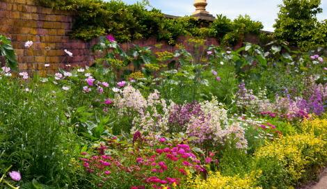 美しい宿根草の庭