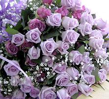 70本の紫バラの花束