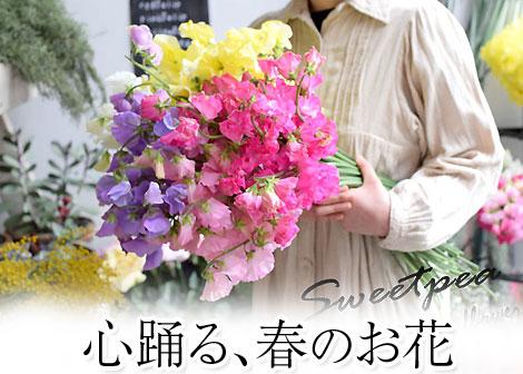 春のお花特集