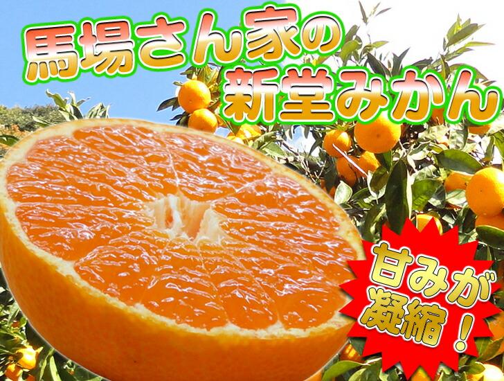 生産量日本一の和歌山みかん!糖度12度以上の絶品みかん♪甘みと酸味の絶妙なバランスのとれたみかん!