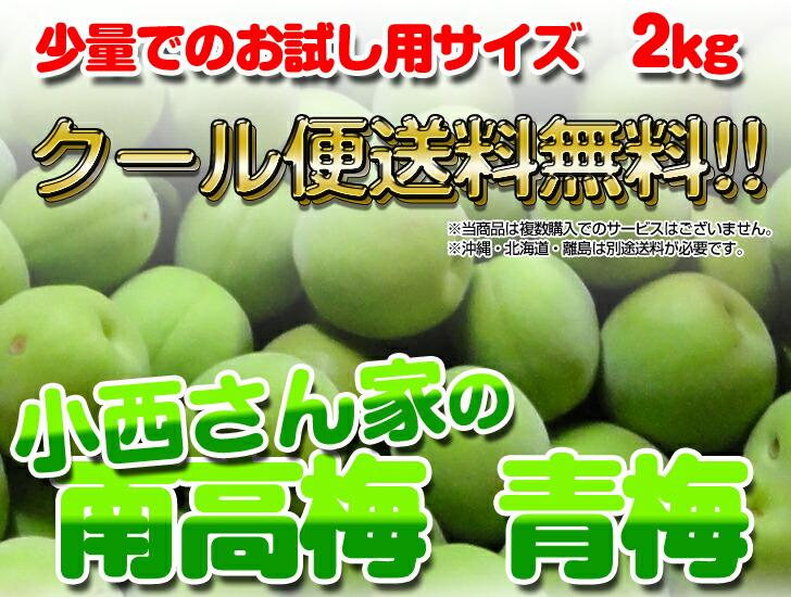 紀州南高梅は和歌山の特産品!とても綺麗な色合いで梅酒には抜群です!当商品はお試し用サイズとなります。 青ウメ あおうめ アオウメ aoume