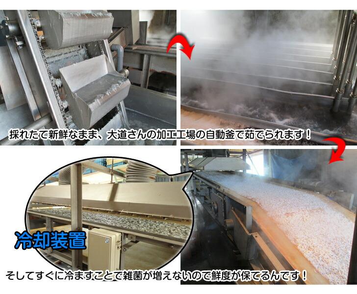 新鮮なしらすは加工工場の自動釜で茹でられます。そしてすぐに冷ます事で雑菌が増えないので鮮度が保てるのです。