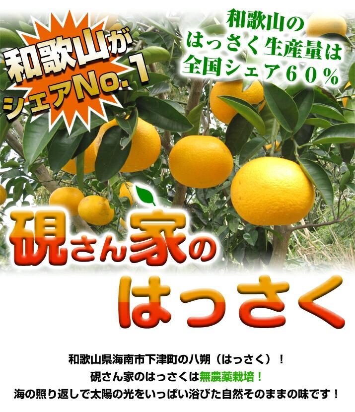 生産量ダントツ日本一の和歌山のはっさく!自然の恵みはっさく♪硯さん家のはっさく(八朔)さつき八朔に負けないぐらい美味しい