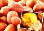 安納芋の生芋
