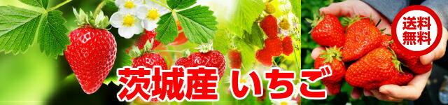 朝採り即日配送いちご,苺,イチゴ