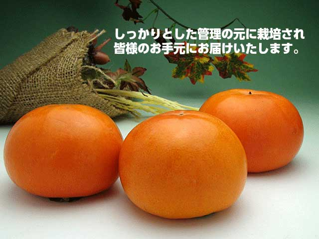 甘味と柔らかさが特徴,柿,富有柿,皇室献上,かき,完熟,送料無料,歳暮,お歳暮,ギフト