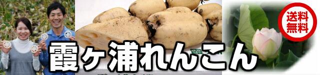霞ヶ浦レンコン【早割】12月19日出荷まで!NKKあさイチで紹介話題沸騰!