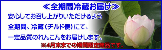 早堀れんこん,7月28日〜8月15日までの期間限定!,蓮根,レンコン,霞ヶ浦れんこんギフト
