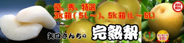 【梨(幸水・豊水・新高・新興)特選完熟】 収穫当日に出荷!ギフトに最適せす。