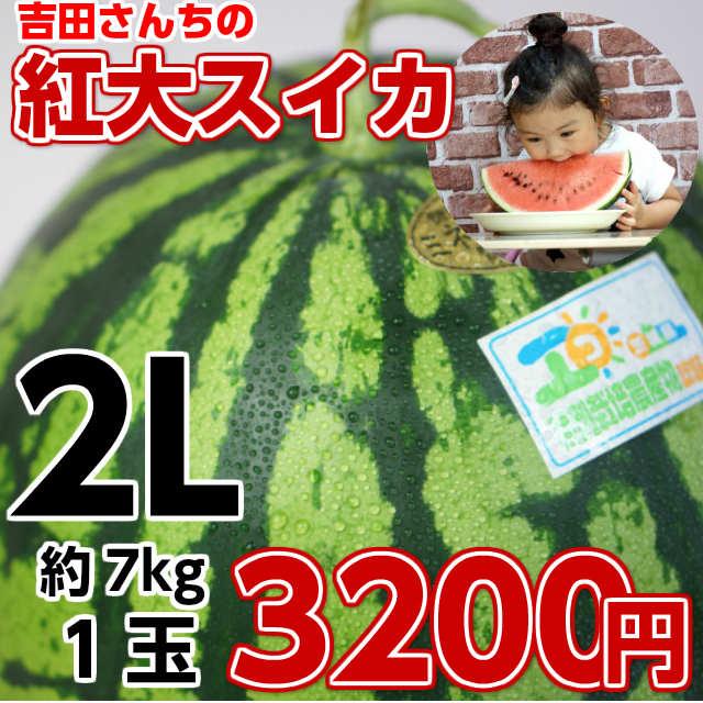吉田さんちの紅大スイカ2L1玉,スイカ,甘い,お中元 ギフト