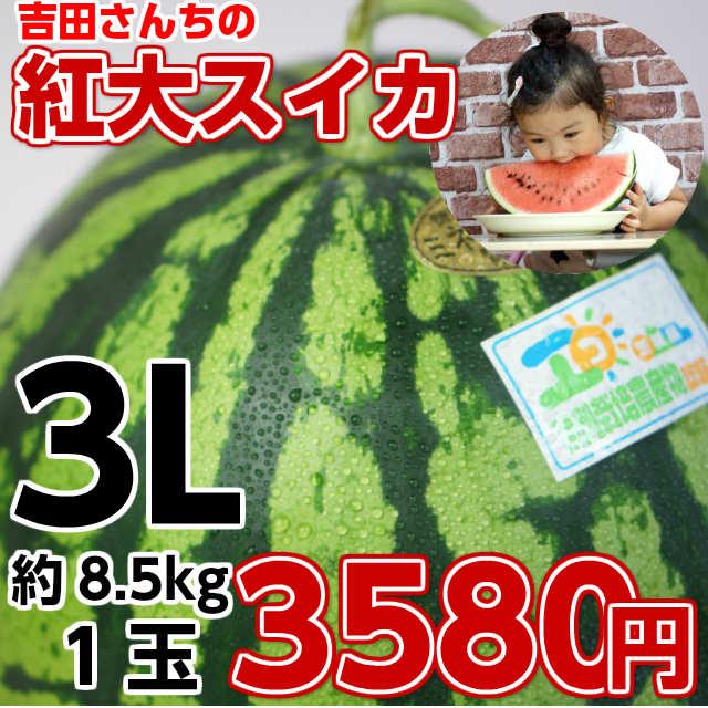 吉田さんちの紅大スイカ3L1玉,スイカ,甘い,すいか,お中元 ギフト